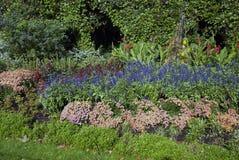 Kwiaty w ogródzie Obrazy Stock