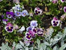 Kwiaty w ogródzie Obraz Royalty Free