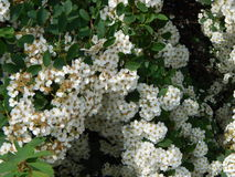 Kwiaty w ogródzie Obrazy Royalty Free