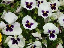 Kwiaty w ogródzie Zdjęcie Royalty Free