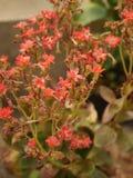 Kwiaty w ogródzie Zdjęcie Stock