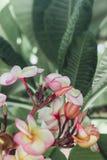 Kwiaty w ogródzie botanicznym obrazy royalty free