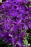 Kwiaty w ogródzie botanicznym Zdjęcie Stock