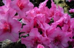 Kwiaty w ogródzie botanicznym Zdjęcie Royalty Free