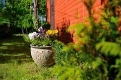 Kwiaty w ogródzie, garnek Obraz Royalty Free
