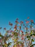 Kwiaty w ogródzie w mieście obrazy stock