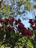 Kwiaty w ogr?dzie zdjęcia royalty free