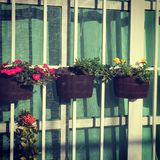 Kwiaty w okno obrazy stock