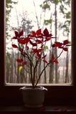 Kwiaty w okno Zdjęcia Stock
