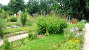 Kwiaty w parku zdjęcie stock