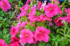 Kwiaty w parku i gospodarstwie rolnym Obraz Royalty Free