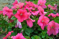 Kwiaty w parku i gospodarstwie rolnym Zdjęcie Stock