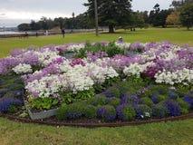 Kwiaty w parku w Sydney CBD obraz royalty free