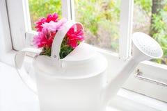 Kwiaty w podlewanie garnku Obraz Royalty Free