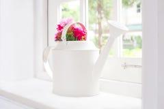 Kwiaty w podlewanie garnku Obrazy Royalty Free