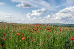Kwiaty w polu Obrazy Royalty Free