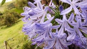 Kwiaty w polu Zdjęcia Stock