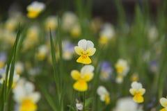 Kwiaty w polu Przyroda na słonecznym dniu Kwiatu dorośnięcie na zielonej trawie i daje radości wszystko fotografia stock