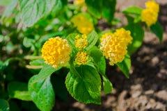 Kwiaty w przedpolu Zdjęcia Royalty Free