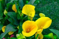 Kwiaty w przedpolu Obraz Royalty Free