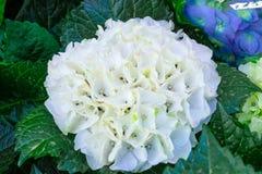 Kwiaty w przedpolu Obraz Stock