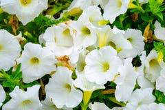 Kwiaty w przedpolu Fotografia Stock
