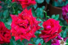 Kwiaty w przedpolu Zdjęcia Stock