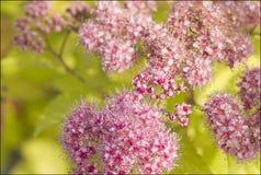 Kwiaty w przedpolu z zielonym tłem Obraz Royalty Free