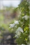 Kwiaty w przedpolu z zielonym tłem Zdjęcie Royalty Free