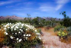 Kwiaty w pustyni Obrazy Stock