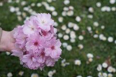 Kwiaty w ręce Obraz Stock