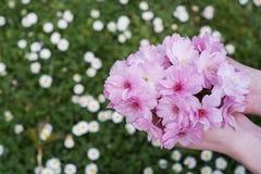 Kwiaty w ręce z backround Obraz Royalty Free