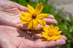 Kwiaty w rękach Zdjęcia Stock