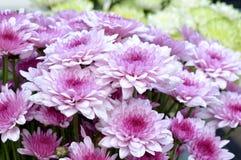 Kwiaty w ranku dniu Fotografia Royalty Free