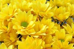 Kwiaty w ranku dniu Obrazy Stock