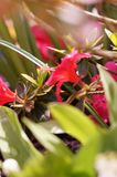 KWIATY W REWELACYJNYCH kolorach Fotografia Royalty Free