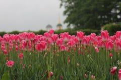 Kwiaty w Rosja Obrazy Stock