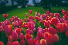 Kwiaty w słońcu Fotografia Royalty Free