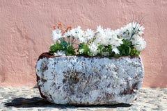Kwiaty w Santorini Zdjęcie Royalty Free