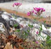 Kwiaty w Shirakawago wiosce zdjęcie stock