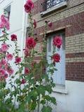 Kwiaty w spokojnej ulicie Obraz Stock