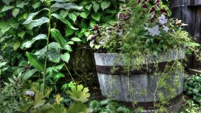 Kwiaty w starej drewnianej baryłce Zdjęcia Royalty Free