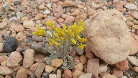 Kwiaty w suchym riverbed Zdjęcie Stock