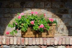 Kwiaty w terakoty pudełku Obraz Stock