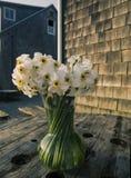 Kwiaty w wazie w Menemsha Massachusetts na martha's vineyard Obrazy Stock