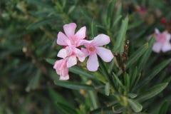 Kwiaty w wiązce fotografia stock