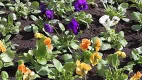 Kwiaty w wiatrze zdjęcie wideo