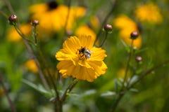 Kwiaty w wiejskim lecie uprawiają ogródek w niemieckiej wsi zdjęcia stock