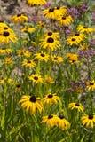 Kwiaty w wiejskim lecie uprawiają ogródek w niemieckiej wsi zdjęcia royalty free