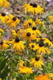 Kwiaty w wiejskim lecie uprawiają ogródek w niemieckiej wsi zdjęcie royalty free